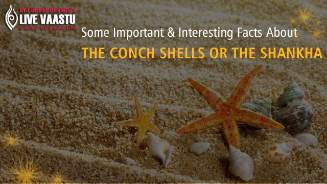 Some Important And Interesting Facts About The Conch Shells Or The Shankha