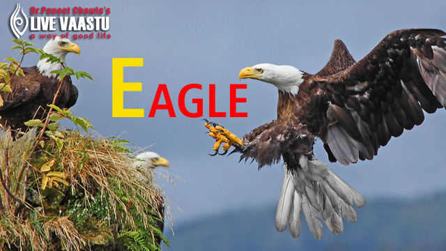 Vastu Tips On Eagle - Strongest Nation Of The World