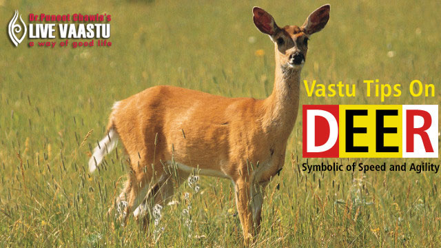 Vastu Tips On Deer - Symbolic of Speed and Agility