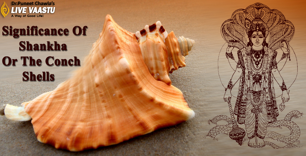 Significance Of Shankha Or The Conch Shells