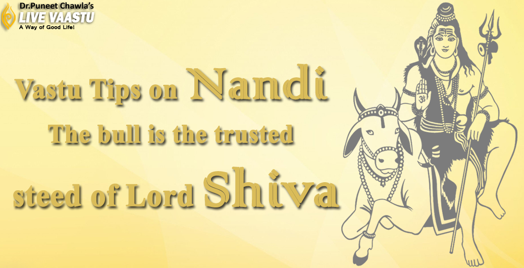 Vastu Tips on Nandi -The bull  is the trusted steed of Lord Shiva