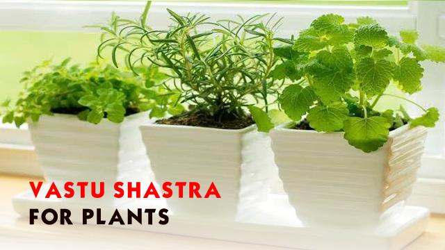 Vastu shastra for plants