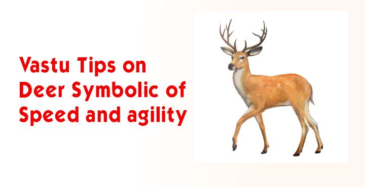 Vastu Tips On Deer - Symbolic of Speed and Agility