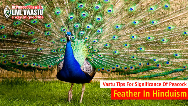 Vastu Tips Significance Of Peacock Feather In Hinduism