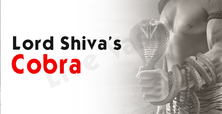 Lord Shiva Cobra
