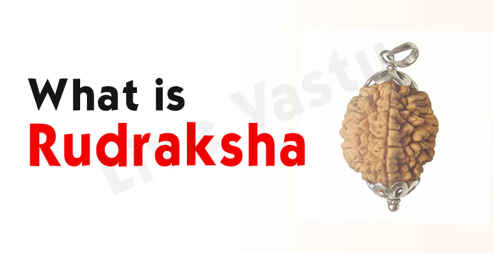 What is Rudraksha ?