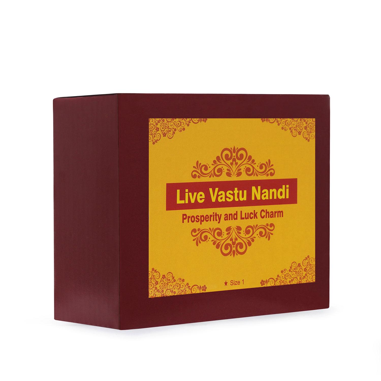 Live Vastu Nandi Model 1
