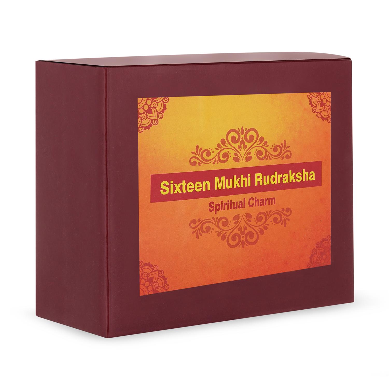 Sixteen Mukhi Rudraksha