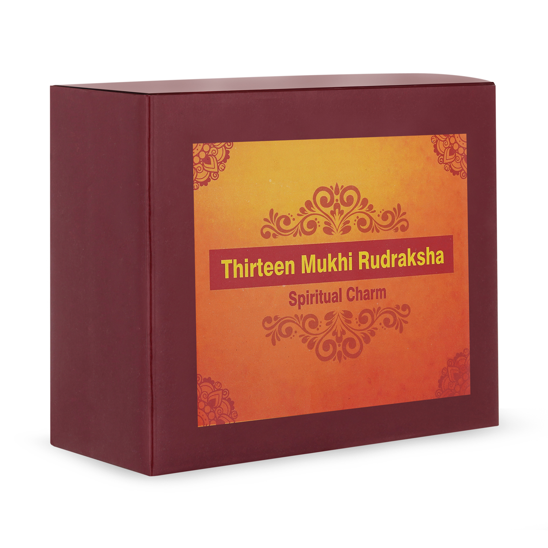 Thirteen Mukhi Rudraksha