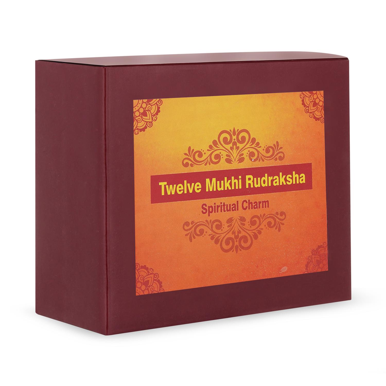 Twelve Mukhi Rudraksha