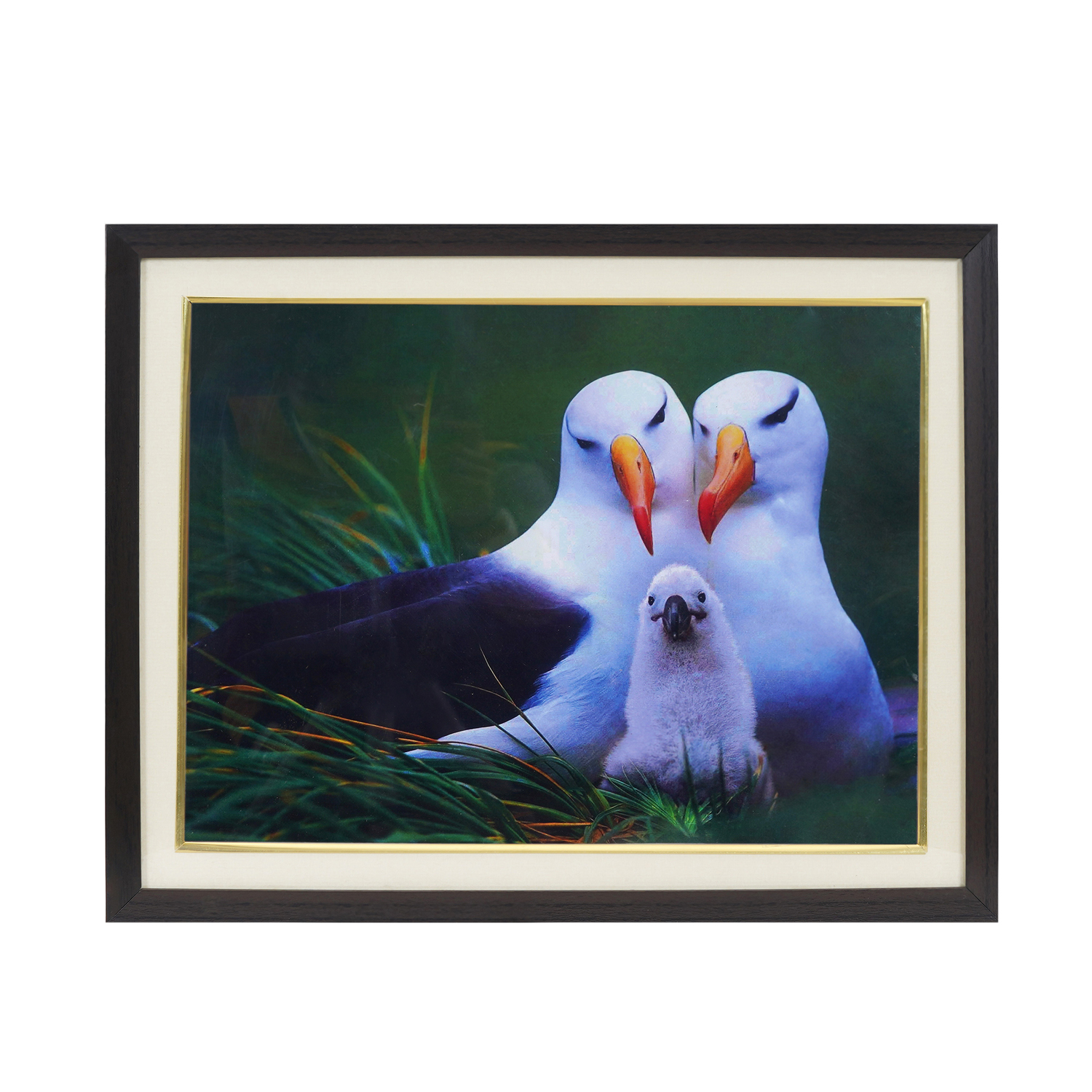 Bird Picture For Family Relationship