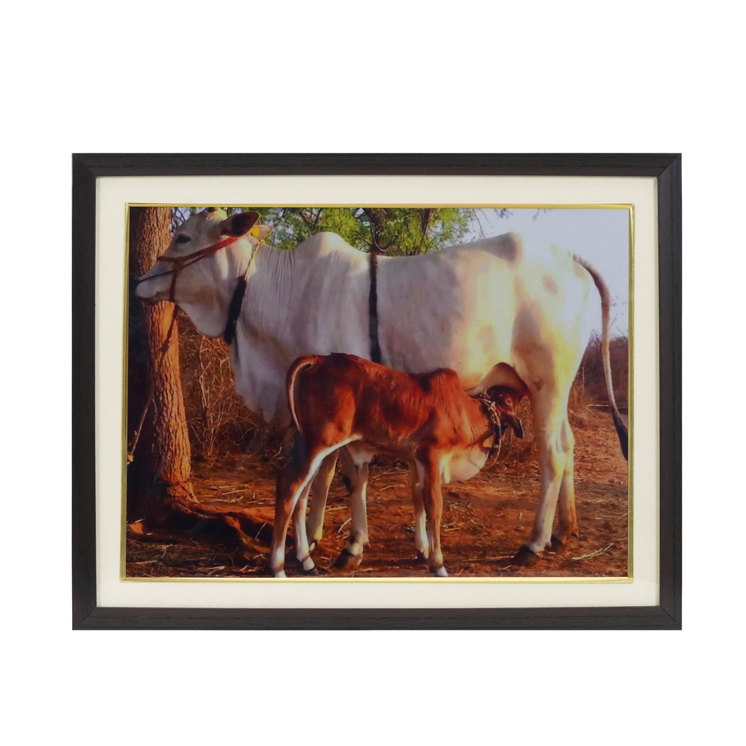 Cow And Calf For Family Relationship