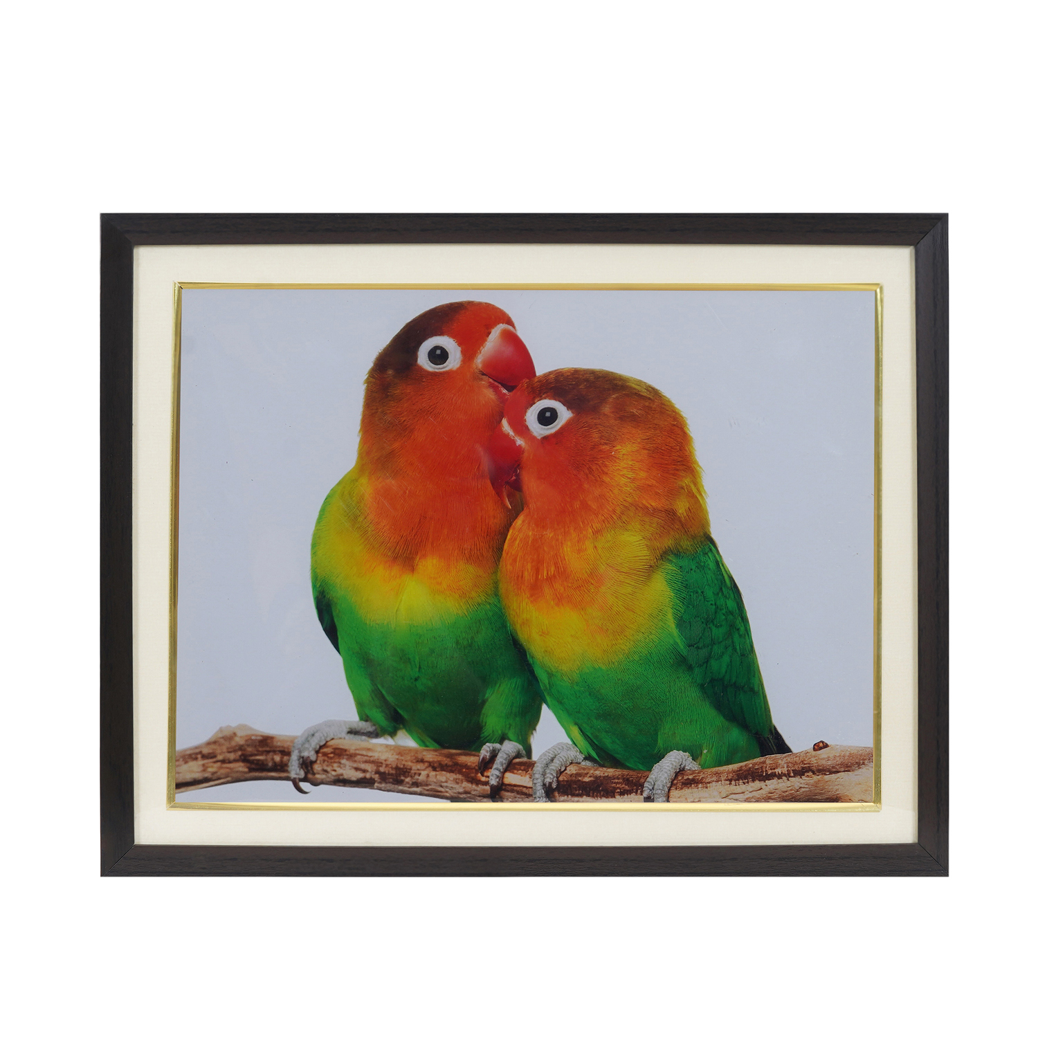 Parrot Couple For Relationship