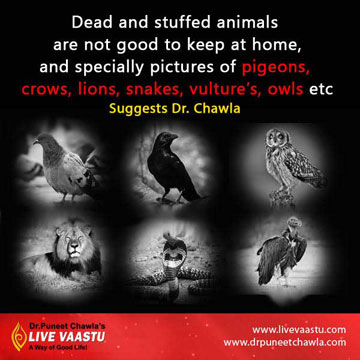Never keep dead and stuffed animals at home that bring negative energies.